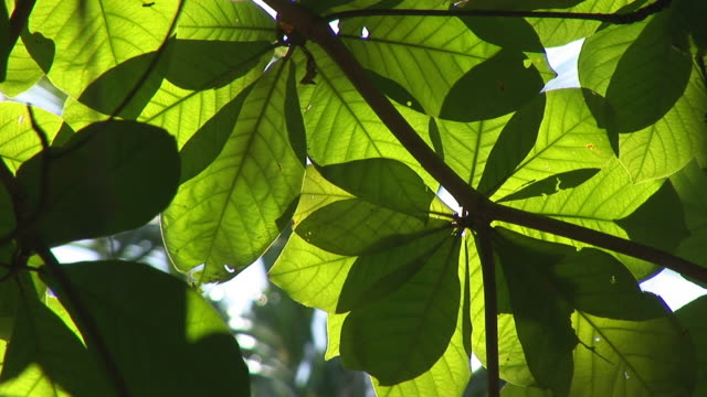 tropical foliage video