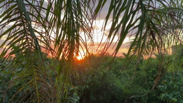 Tropical Forest and Ocean Sunset Tropical Forest and Ocean Sunset. coconut palm tree stock videos & royalty-free footage