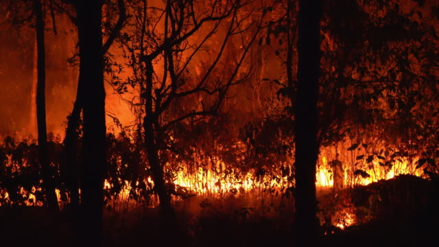 4K Tropical forest fire burning, Wildfire Lockdown shot at night 4K Tropical forest fire burning, Wildfire Lockdown shot at night australia stock videos & royalty-free footage