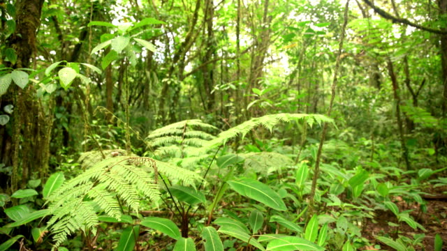 DS Tropical forest undergrowth video
