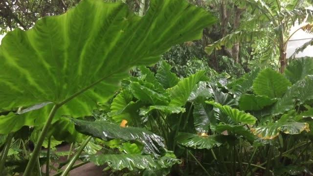 tropische tuin met planten en vallende regen video