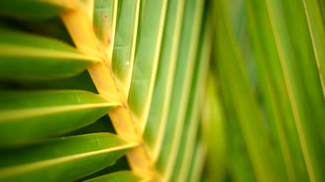verde tropicale foglia di palma in macro soffiare nel vento - cespuglio tropicale video stock e b–roll