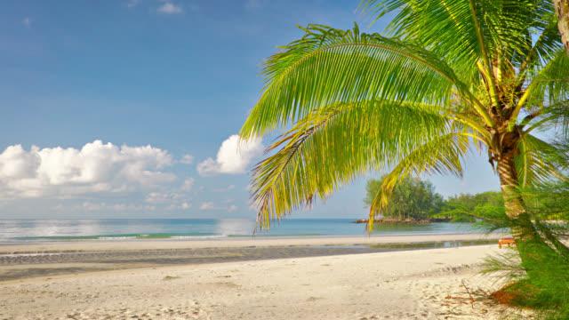Tropischer Urlaubsstrand. Palme. sommer. Sonne. Blauer Himmel – Video