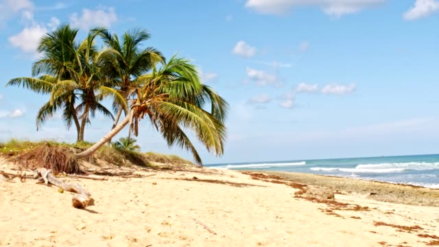 tropical holiday beach - albero tropicale video stock e b–roll