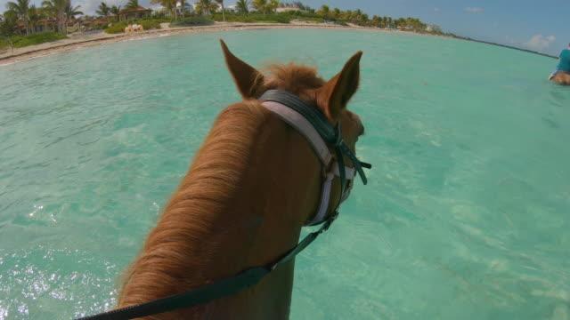 stockvideo's en b-roll-footage met tropical horseback tour turken en caicos - providenciales