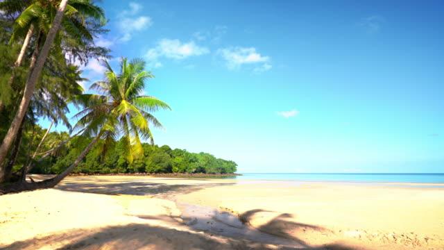 Tropical island and palm beach lagoon video