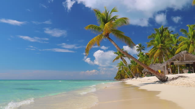 Tropical island. Exotic beach with palms around. Holiday and vacation concept.