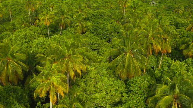 Tropical island with palm trees Tropical island with palm trees, Maldives coconut palm tree stock videos & royalty-free footage