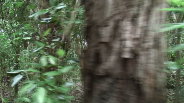 (hd1080i) tropical jungle: moving, tracking shot - {{searchview.contributor.websiteurl}} stock videos & royalty-free footage