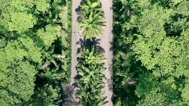 バリ島のトロピカルジャングルを道路で割ったもの - インドネシア点の映像素材/bロール