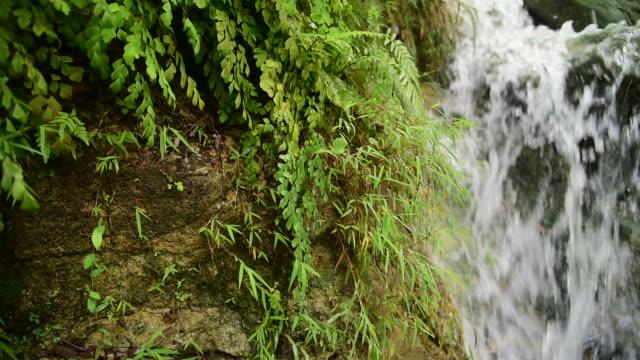 cascata di giungla tropicale con forte flusso, java, indonesia - cespuglio tropicale video stock e b–roll