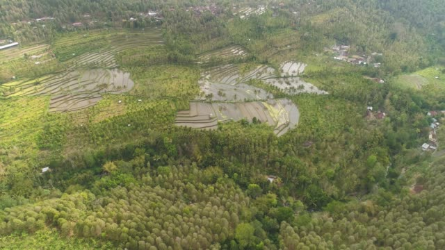tropical landscape with agricultural land in indonesia