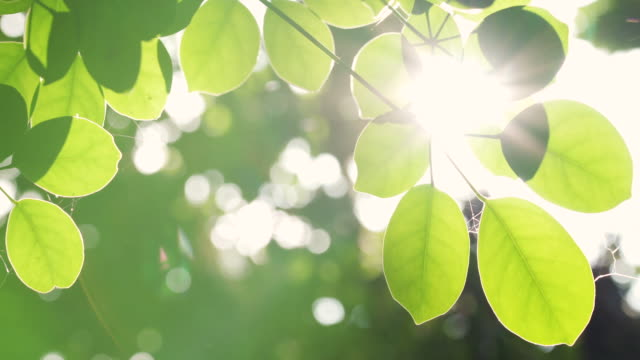 Tropical leaf with sunlight and lens flare