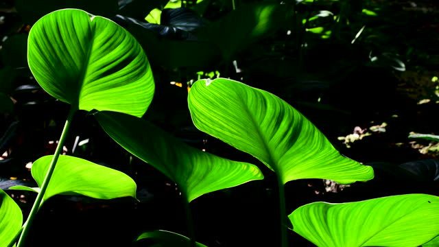 tropical leaves swaying in the wind