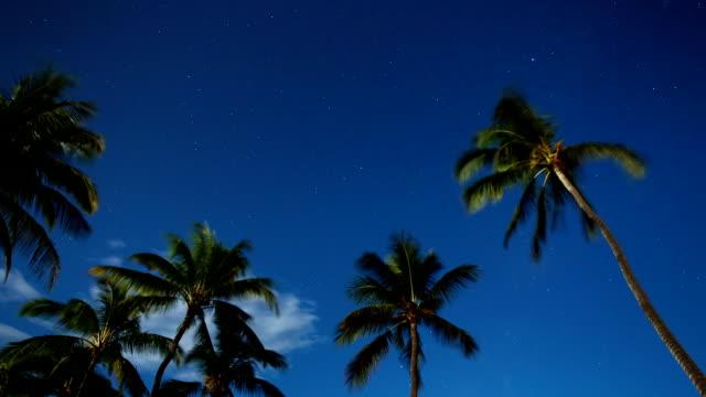 tropical night sky time lapse - nightsky bildbanksvideor och videomaterial från bakom kulisserna
