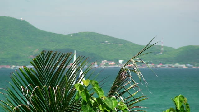 Tropical Ocean video