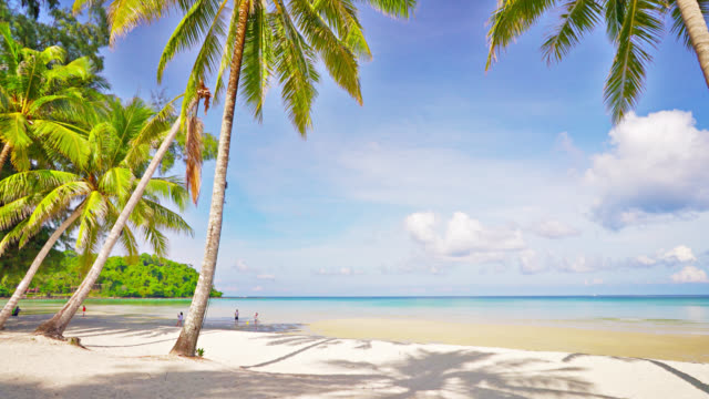 Tropical palm tree beach Nature Background tropical climate stock videos & royalty-free footage
