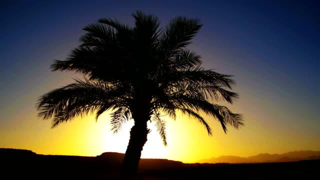tropikal palmiye ağacı siluet günbatımı arka plan ve özetliyor dağ - okyanus gemisi stok videoları ve detay görüntü çekimi