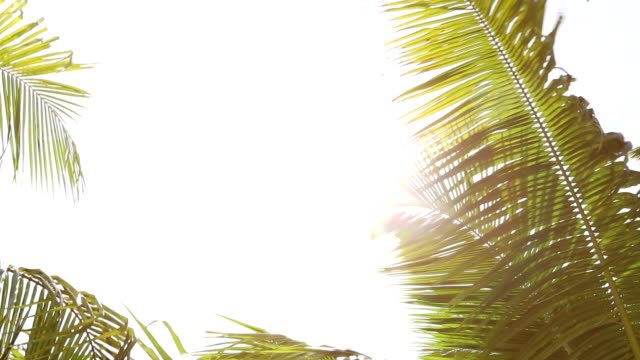 tropical palm trees against the light with white space background - albero tropicale video stock e b–roll