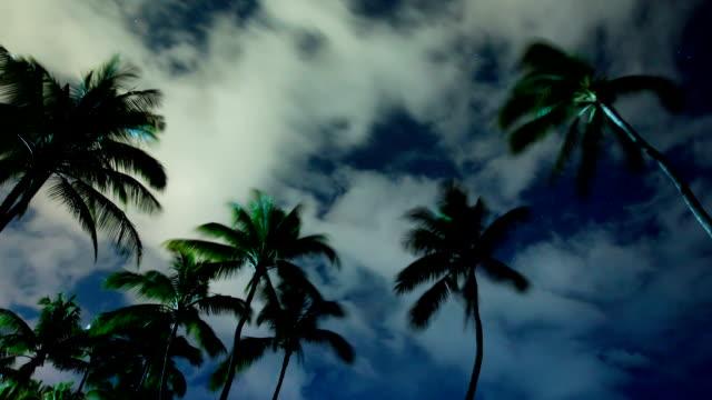 tropical palm trees at night - nightsky bildbanksvideor och videomaterial från bakom kulisserna