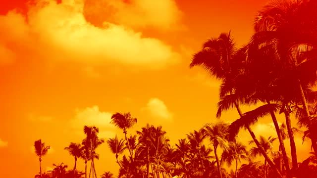 tropical palm trees background - 熱帶樹 個影片檔及 b 捲影像