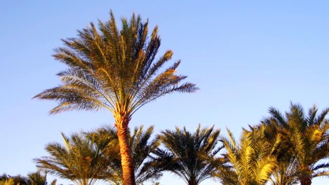 gökyüzü arka planda çöl tropikal palmiye ağaçlarının - okyanus gemisi stok videoları ve detay görüntü çekimi