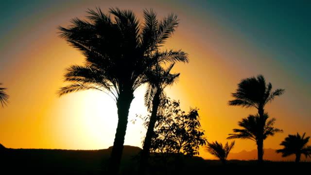 tropikal palmiye ağaçları siluet günbatımı arka plan ve özetliyor dağ - okyanus gemisi stok videoları ve detay görüntü çekimi