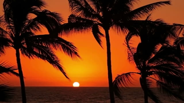 Tropical palm trees sway in wind at sunset video