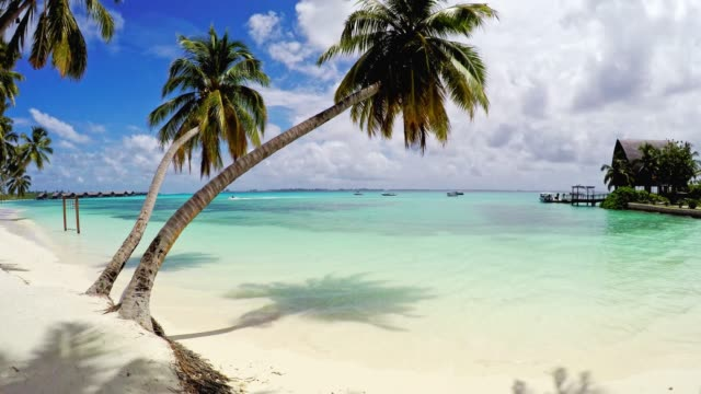 Tropical paradise - Palm trees on white sandy beach video
