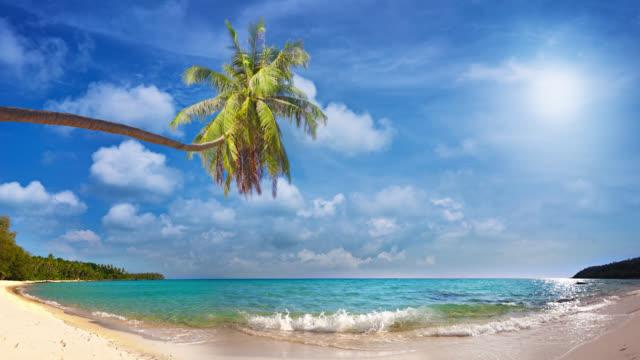 tropical paradise - palm tree filmów i materiałów b-roll