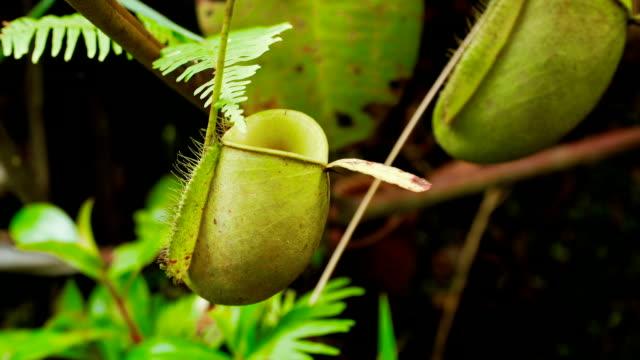 tropiska krukväxter - utdöd bildbanksvideor och videomaterial från bakom kulisserna