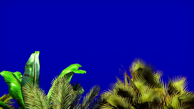 tropical plant in the wind on blue screen. beautiful summer looped background. - albero tropicale video stock e b–roll