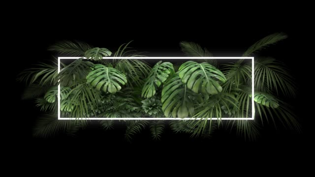 tropical plant with neon light on an black background - neon video stock e b–roll