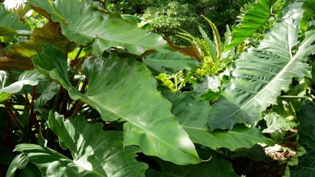Tropical plants aloe vera in garden in Miami, USA video