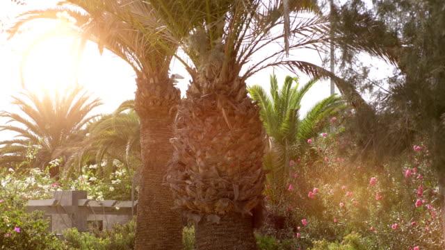 tropical plants in hawaii in 4k slow motion 60fps - проспект стоковые видео и кадры b-roll