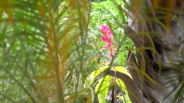 piante tropicali alle hawaii in 4k slow motion 60fps - cespuglio tropicale video stock e b–roll