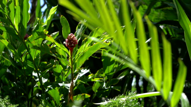 tropical plants in hawaii in 4k slow motion - cespuglio tropicale video stock e b–roll