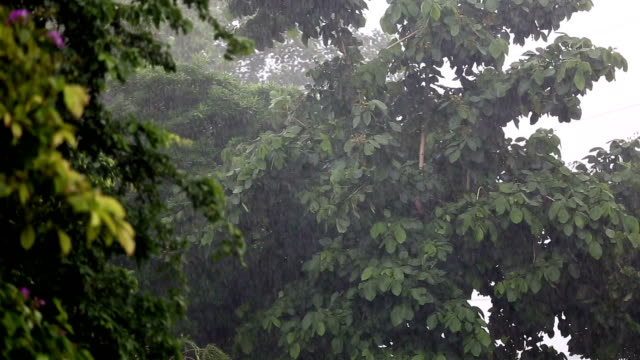 Tropical Pouring Rain video