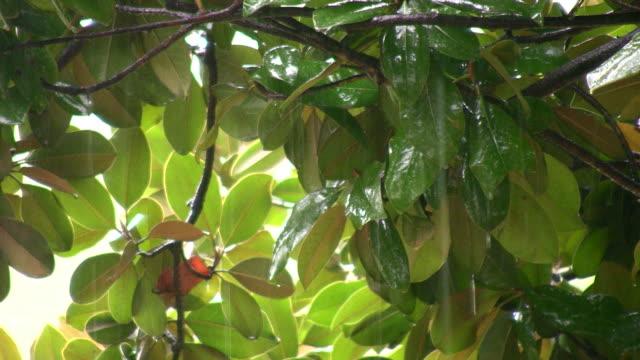 tropical rain 3 video