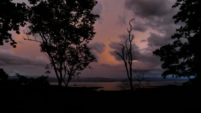 Tropical Rain forest after sunset. video