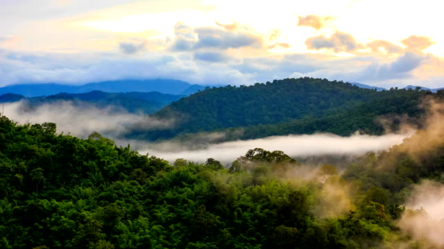 Tropical rain forest in misty video