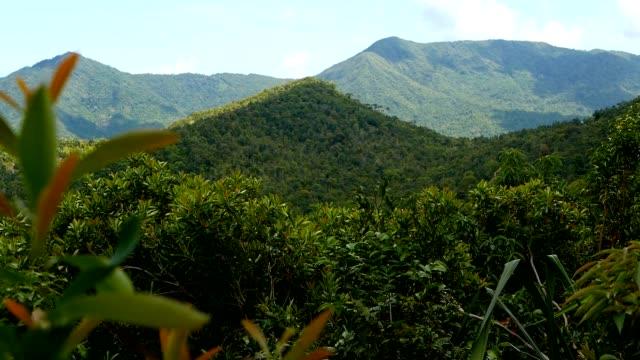 エキゾチックな島の緑豊かな緑のジャングルの上の火山と熱帯雨林の風景。 - インドネシア点の映像素材/bロール
