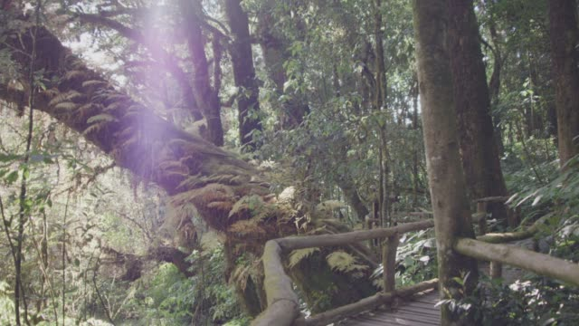 Tropischer Regenwald-trail – Video