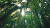 istock Tropical rain forest trees, Birth of cloud 1044134410