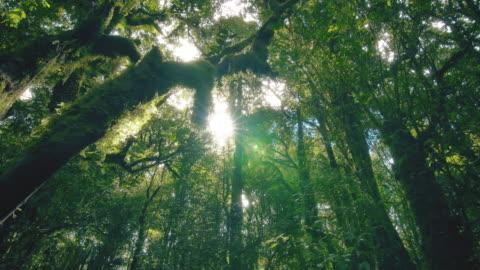 tropikalne drzewa lasu deszczowego, narodziny chmury - relaks filmów i materiałów b-roll