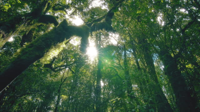 tropical rain forest trees, birth of cloud - clima video stock e b–roll