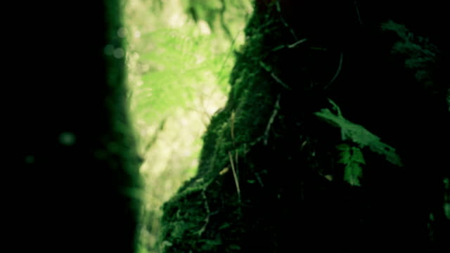 Tropical rain forest trees, Birth of cloud video