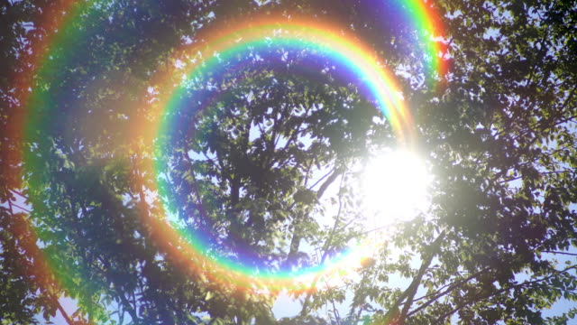 Tropical rain forest trees with rainbow flare