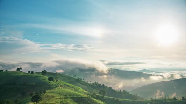 vidéos et rushes de arbres de la forêt tropicale avec des chiens de soleil dans le ciel - forêt tropicale humide