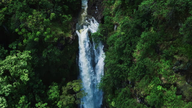 Tropical Rain Forest Waterfall video